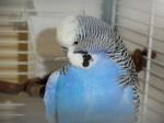 Am I not a beautiful blue?!