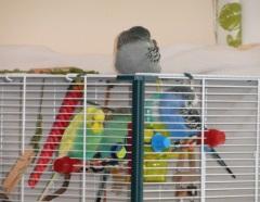 Toyboys taking nap whilst visiting Thomas