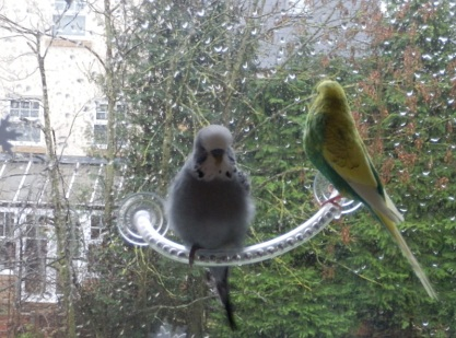 Phineas & Cagney checking out the rain