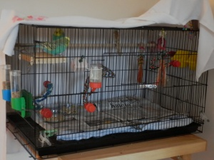 Cagney & Bezukhov in the folding cage