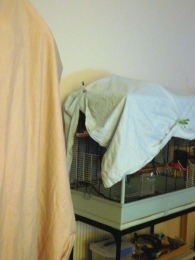 Phinny's cage with cover pegged up so he can see the Toyboys (on left under beige cover).