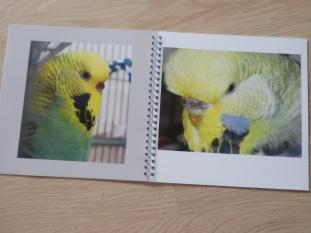 Raspy & Atilla in their memory book