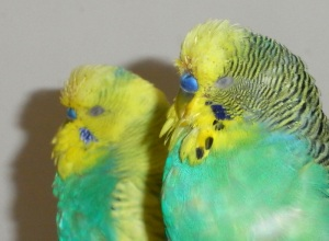 Moulting Toyboys