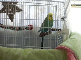 Bezukhov back in the travel cage