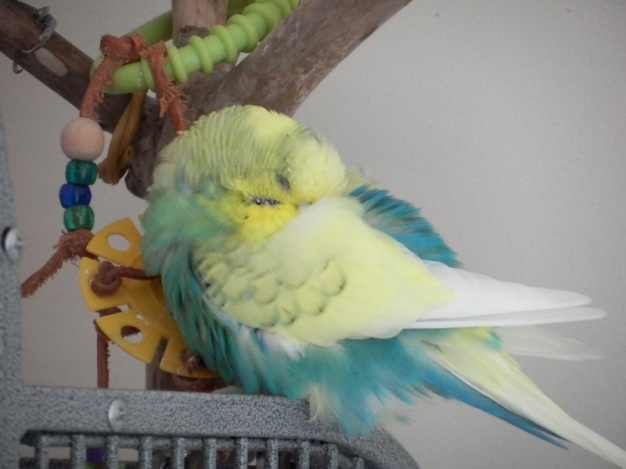 Cagney sleeping