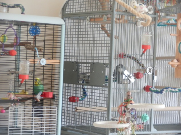 Bezukhov & Phineas eating in separate cages