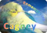 rainbow-Cagney-image