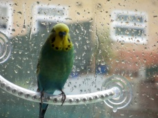 Raindrop 78, raindrop 79, raindrop 80...
