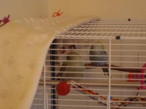 Atilla & Raspy asleep