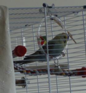Raspy on the swing