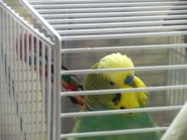 Bezukhov in travel cage
