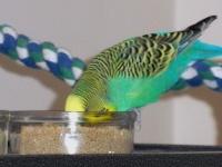 Bezukhov eating pellets