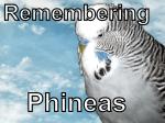 phinny-logo2