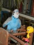 Meeting Tweetie-Pie on the playgym