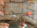 The mess at bottom of cage