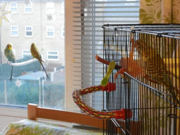 Perry & Lennie watching Bezukhov & Dalai at the window