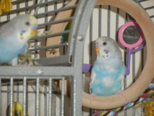 Perry on the wooden swing in the manor & Lennie looking on