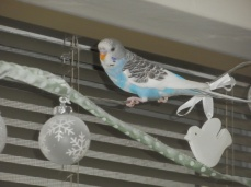 Perry on the string lights