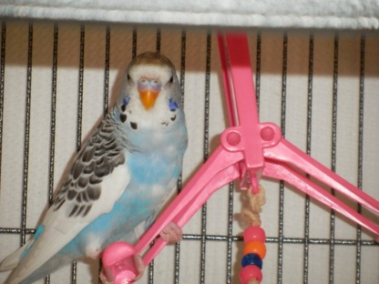 Perry on the hot pink swing