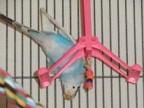 Upside-down Perry on hot pink swing