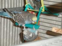 Lennie & an upside down Perry