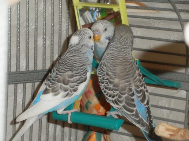 Perry & Lennie