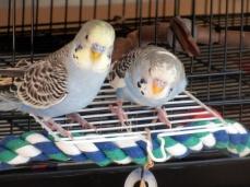 Lennie & Perry