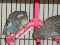 Perry & Lennie on the hot pink swing