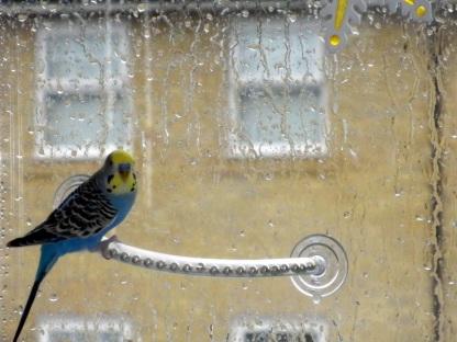Lennie & the rain