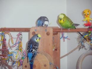 Lennie, Perry & Dalai on the playgym