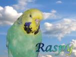 Raspy