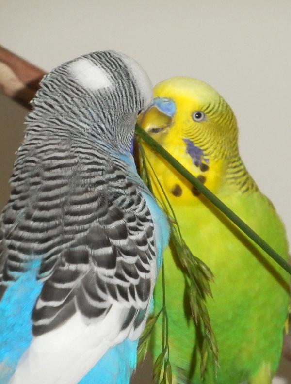 Perry & Dalai