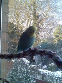 Ian on the window perch