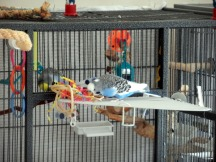 Lennie (inside) & Perry