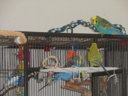 Perry, Lennie, Dalai, Bezukhov