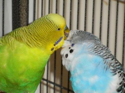 Dalai preening Perry's head