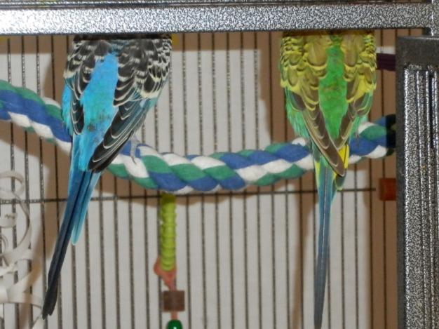 Dalai & Lennie's wings