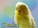 blog-rainbow-bridge-Dalai