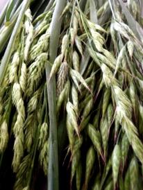 Grass 30 Apr