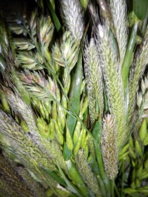 Grass 7 May