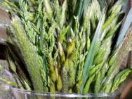 Grass 13 May