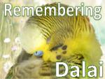 remembering dalai sm - Remember the Dalai on the day of his adoption